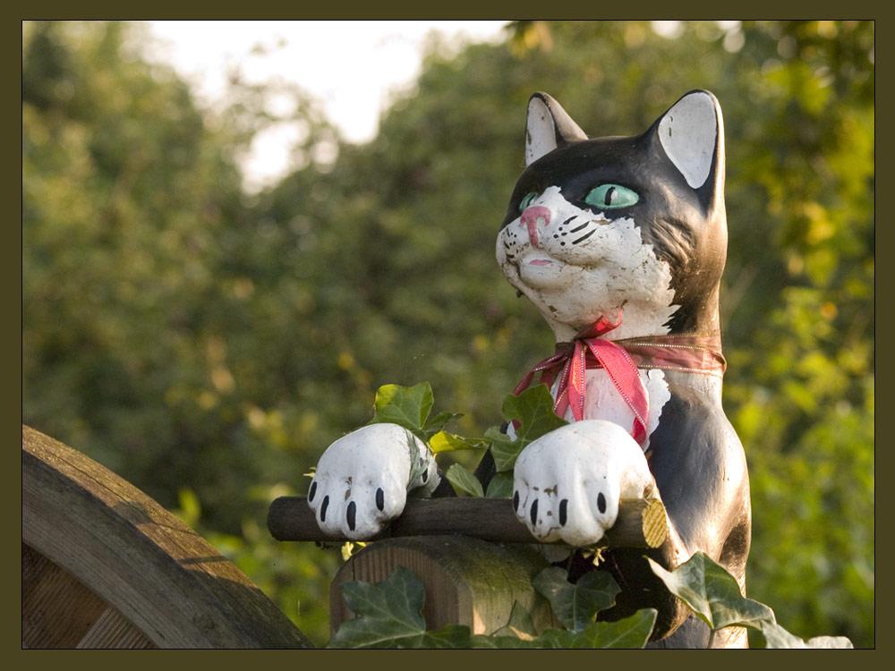 Katze ... [2]