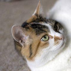 Katze (2. Versuch)