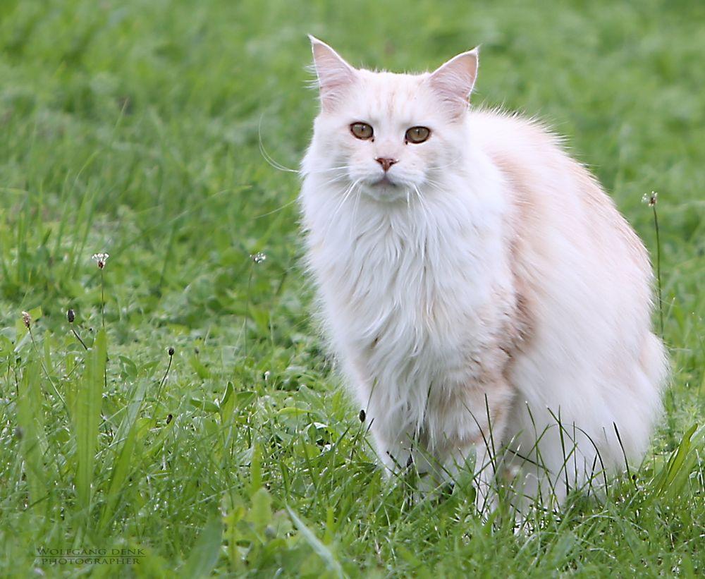 Katze…..