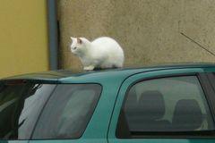 .... Katze am hei.., nee, am kalten Blechdach...