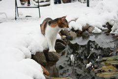 Katze am winterlichen Teich