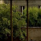 Katze auf Auto unter Bäumen hinter Gittern