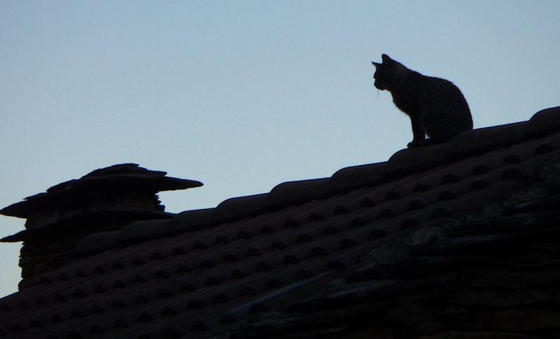 Lesbensex Auf Dem Dach