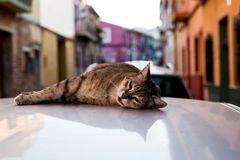 Katze auf dem heißen Blechdach