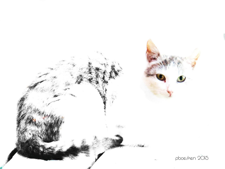 Katze auf den Lofoten