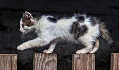 Katze auf Entdeckungsreise!