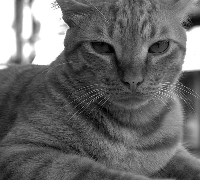 Katze auf Gibraltar II
