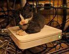 Katze auf schnellem Brüter