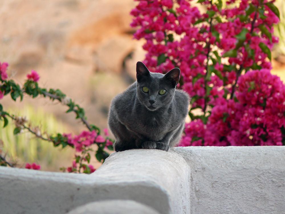 Katze auf Teneriffa