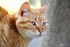 Katze auf Zypern