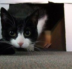 Katze aus dem Karton