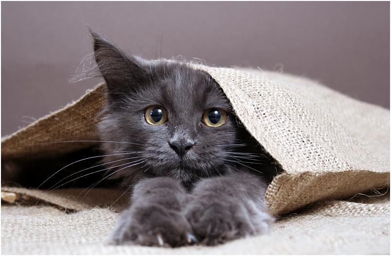 Katze aus dem Sack