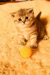 Katze + Ball