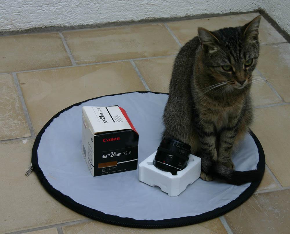 Katze bei ebay zu versteigern!