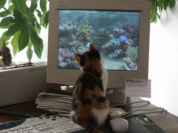 Katze beim Fisch-Fang