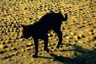 Katze des Berbers