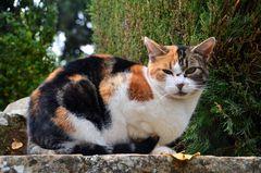 Katze des Kaliefen in der Alhambra