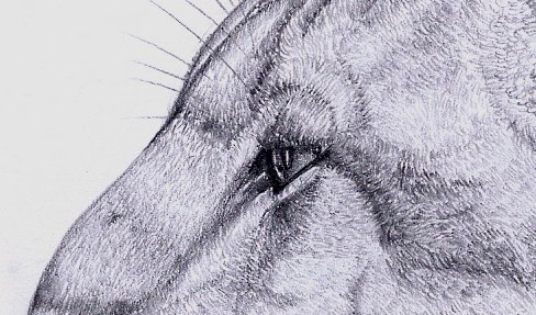 katze [detail]
