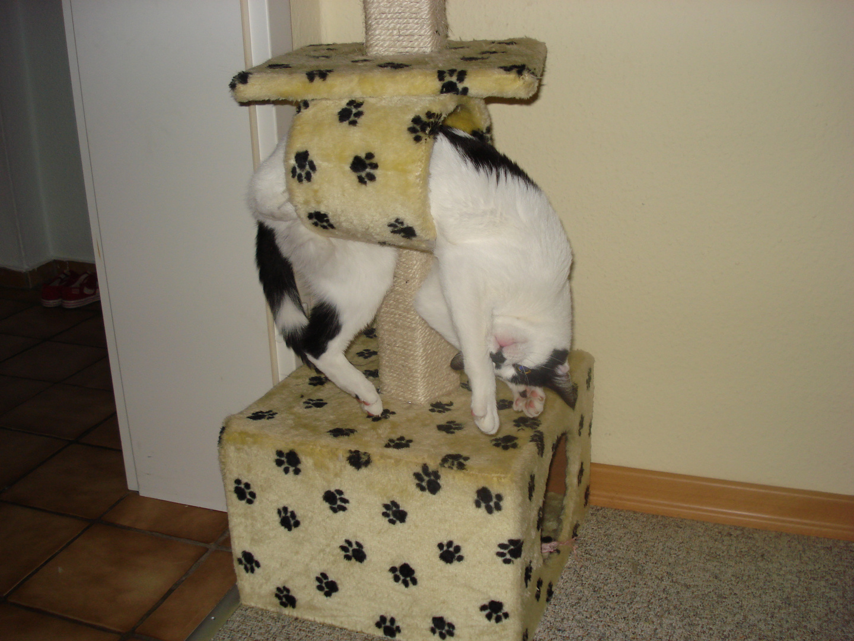 Katze - freihängend