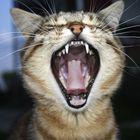 Katze hat Hunger!