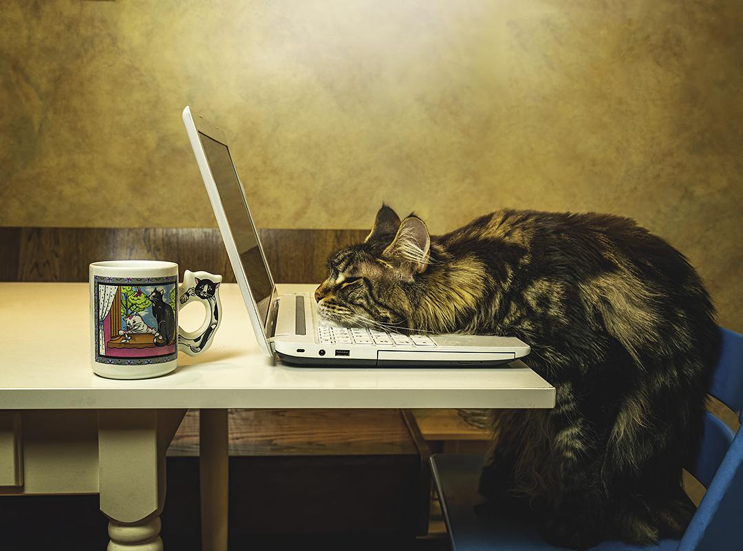 Katze hat zu viel gearbeitet