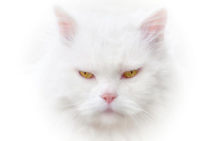 Katze Highkey