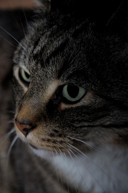 Katze II