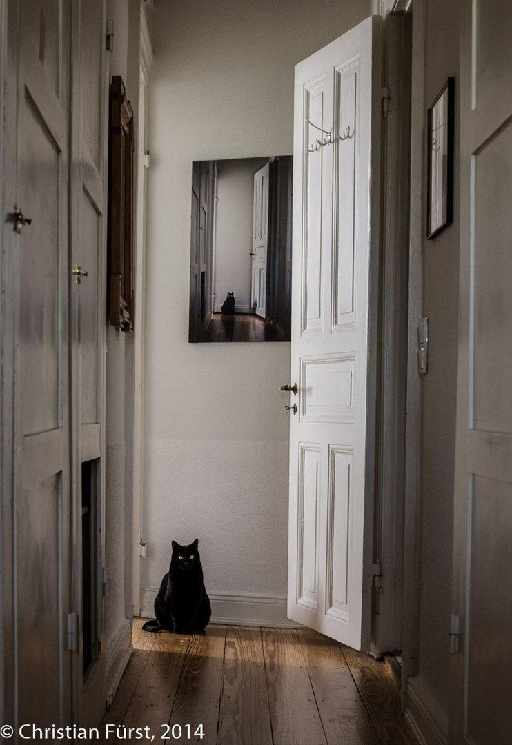 Katze Vor Dem Fernseher Bild: Katze Im Bild Vor Katze Im Bild Foto & Bild