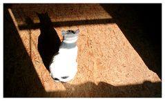 Katze im Fenster... :-)