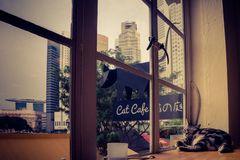 Katze im Fenster mit Bick auf die Marina Bay