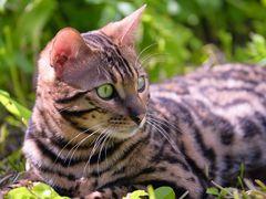 Katze im Gras...