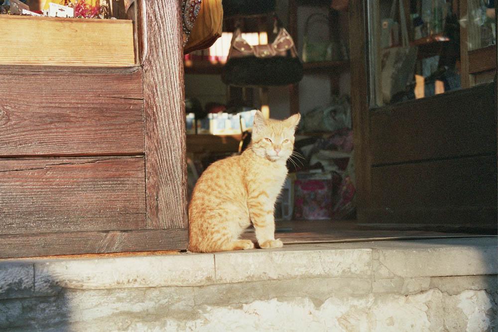 Katze im Licht Mostars (Bosnien-Herzegowina)