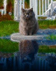 Katze im Mittelpunkt