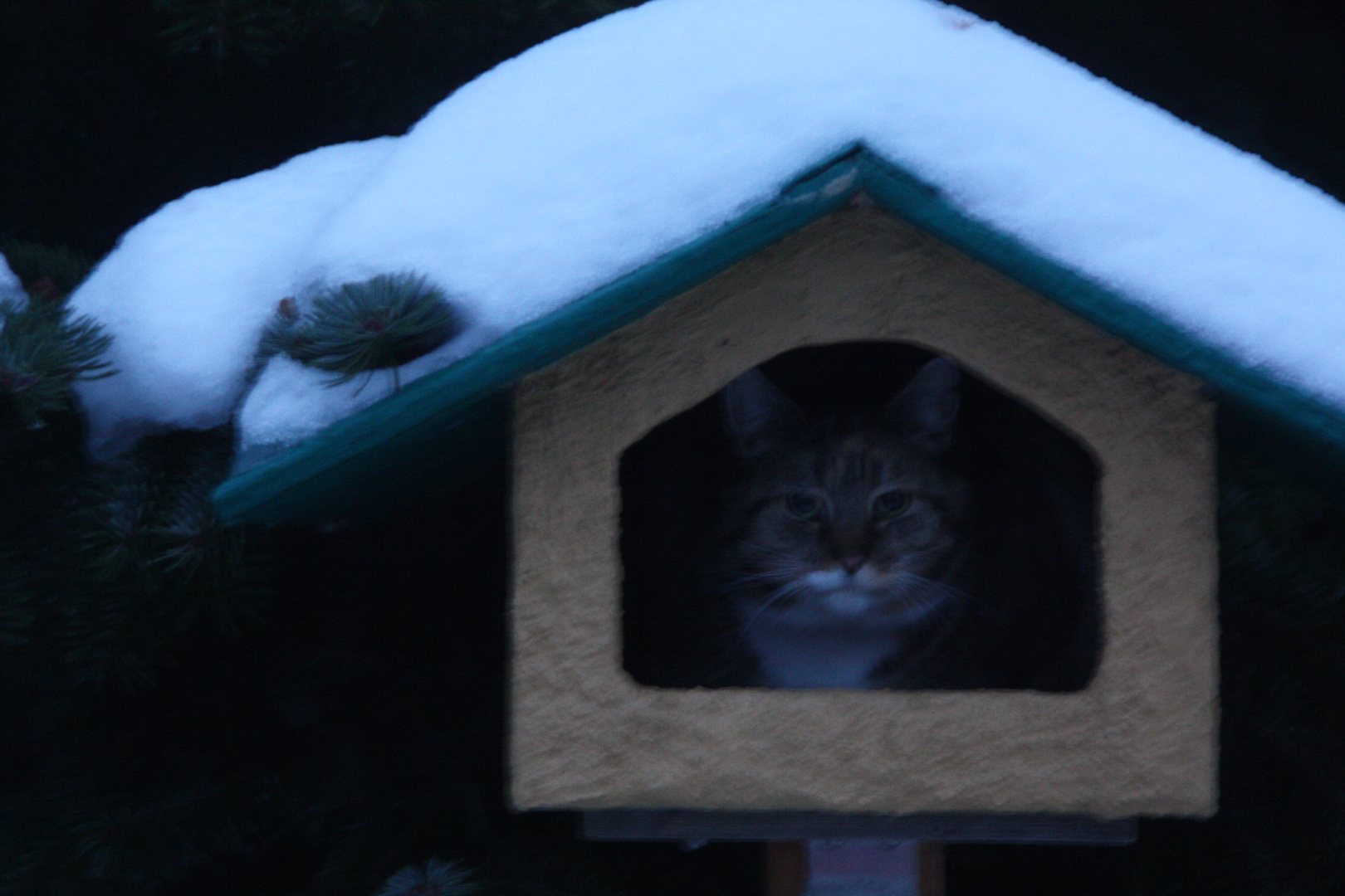 Katze im Vogelhäuschen