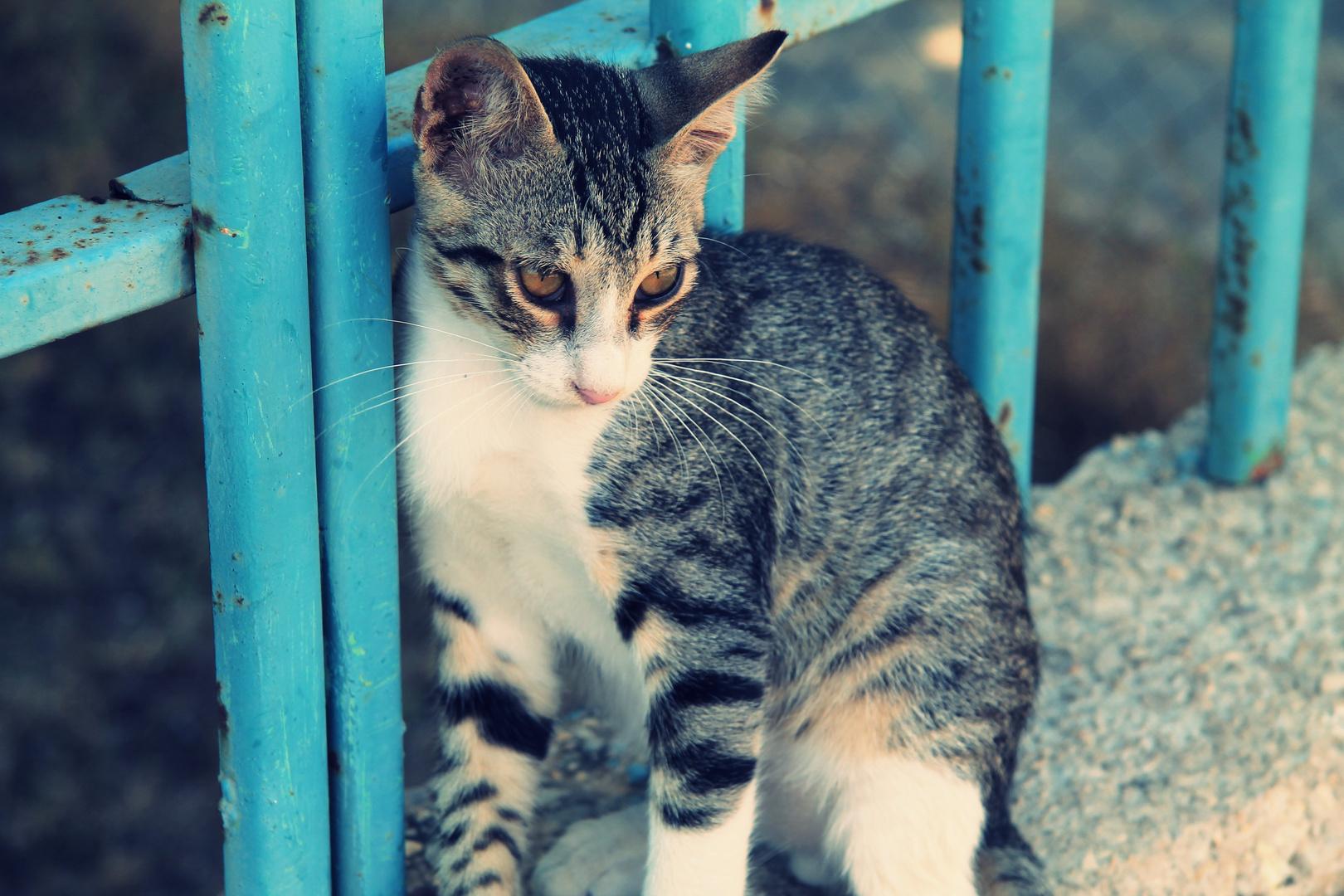 Katze in Ashdod, Israel