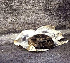 Katze in Athen