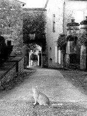 Katze in Biron s/w