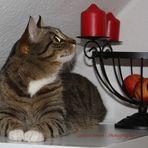 Katze in der Adventszeit
