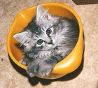 Katze in der Teigschüssel.
