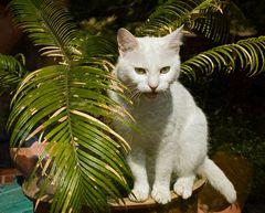 Katze in Nachbars Garten