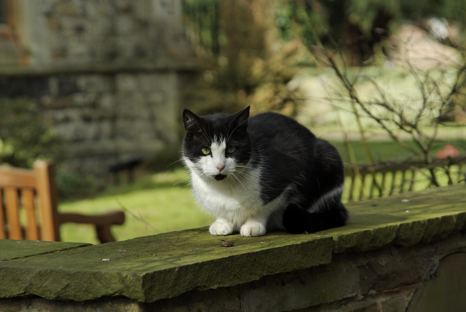Katze in Positur