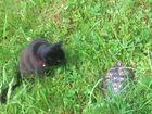 Katze & Kröte
