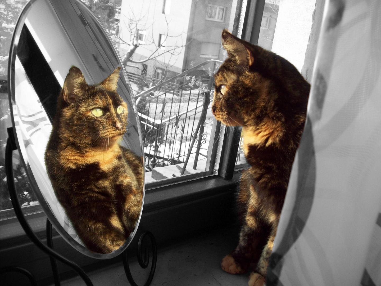Katze Luci.