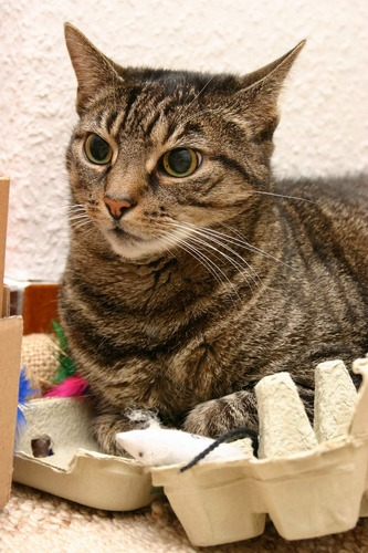 Katze, Maus, Eierkarton