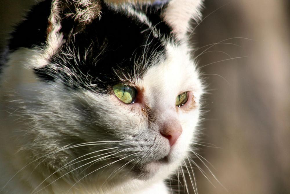 Katze Maxi