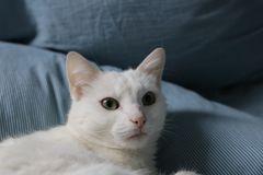 Katze Milli