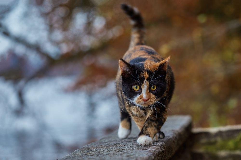 Katze mit Kreuzstich