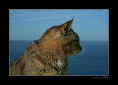 ~~ Katze mit Meerblick ~~
