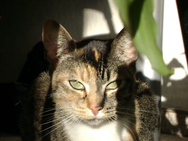 Katze mit scharfem Blick in die Sonne