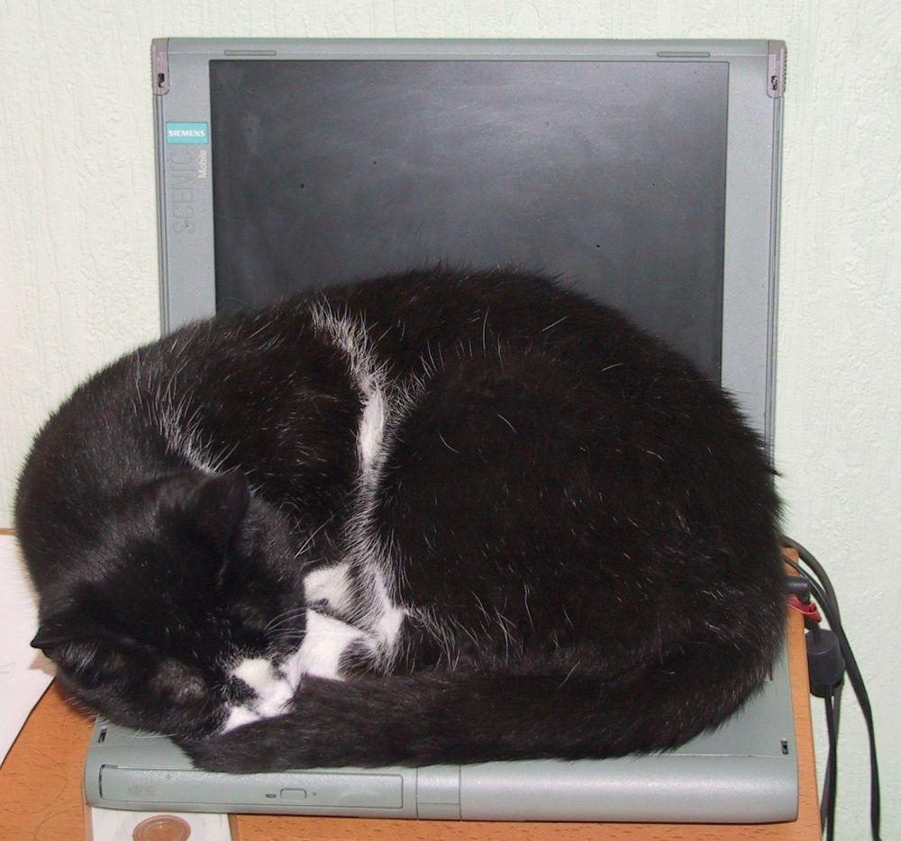 Katze, Notebook und innige Beziehungen